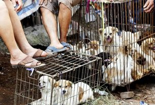 covid-19-coronavirus-dogs-barbecued-fried-in-china