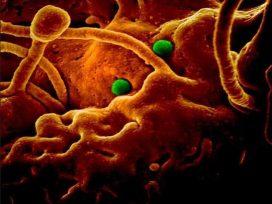 corona-virus-news-updates-death-toll-passes-1800-in-hubei