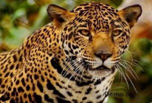 punjab-latest-news-leopard-in-mohali
