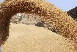 670207-mt-wheat-procurement-completed-in-punjab-on-13th-day