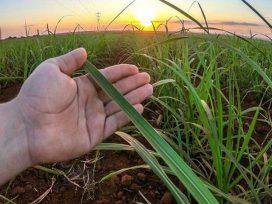 sugarcane-crushing-begins