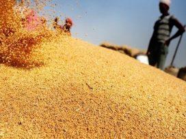 modi-govt-increase-msp-for-rabi-crops